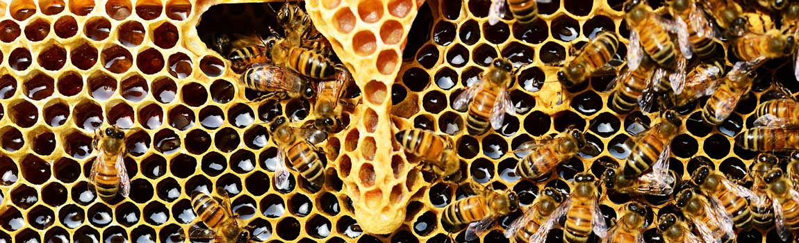 fp-honeycomb2